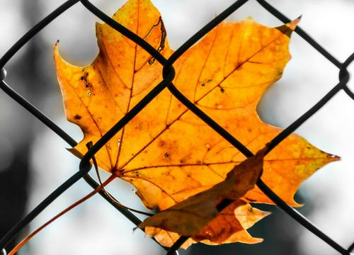 Chain Link Fences San Jose
